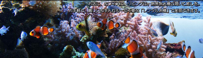 レンタルアクアリウム、熱帯魚水槽レンタルのアクアリバージュ